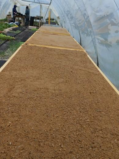 Les tables sont remplies de sables pour accueillir les plants