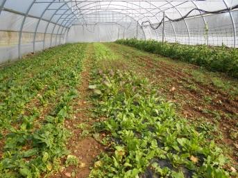 verdurette et épinard