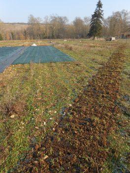 Travail du sol pour préparer la plantation d'une haie fruitière à l'Est des jardins. Une autre sera plantée à l'Ouest.